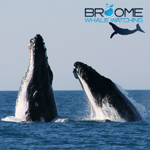 Image - Broome Whale Watching